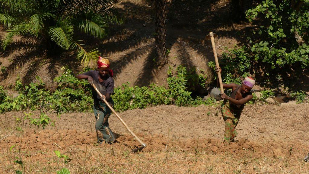 Femmes en train de labourer les champs